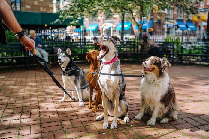 Adestramento positivo é a melhor ação para o cachorro