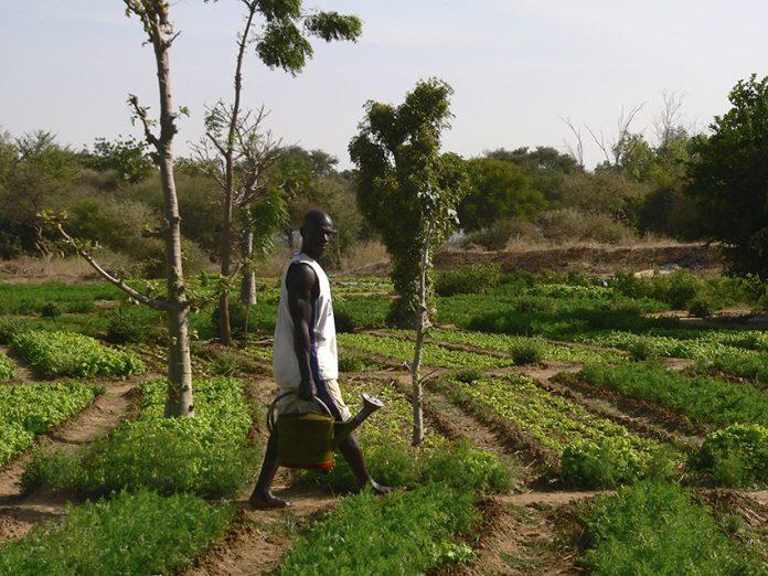 O Ecosia já ajudou a plantar árvores em Burkina Faso
