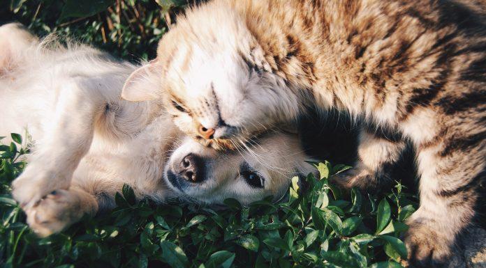 Cães e gatos podem conviver muito bem