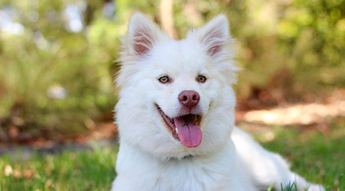 Seu cachorro é feliz, pergunta a colunista Isabela Jardim