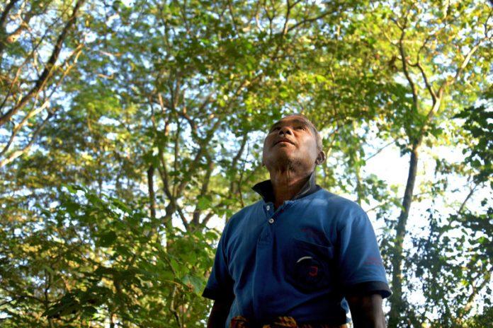 Plantar árvore foi a solução encontrada por Jadav Payeng