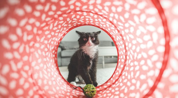 Brincadeiras deixam seu gato mais feliz