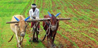 Estado da Índia só tem agricultura orgânica