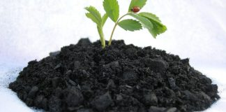 O esgoto é usado para criar energia