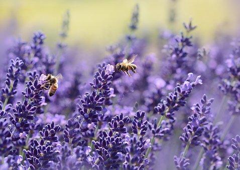 As abelhas são fundamentais para a polinização da maioria dos ecossistemas do planeta