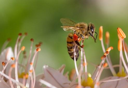 Levantamento mostra que em apenas 3 meses deste ano, mais de 500 milhões de abelhas foram encontradas mortas, em apenas 4 estados brasileiros