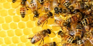Estudo da UFV avalia impacto do campo magnético na morte das abelhas