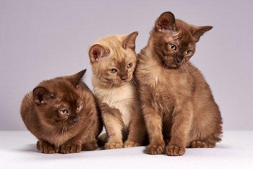 Vacina promete resolver problema de quem tem alergia a gatos.