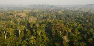 Detalhe da Floresta Amazônica, cujas queimadas estimularam debate em torno do meio ambiente no Twitter.