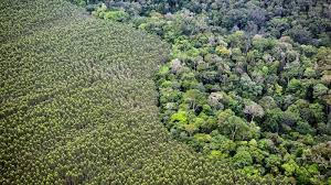 Área da floresta Amazônica desmatada para dar lugar à agricultura.