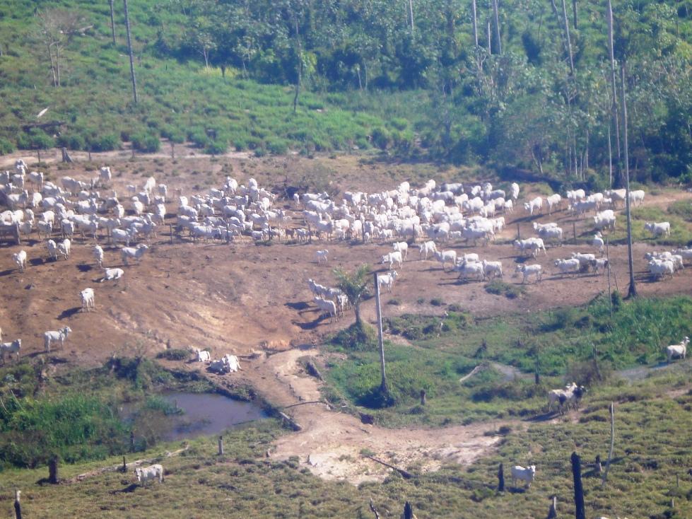 Área desmatada na floresta Amazônica para criação de gato. Foto - Unisinos