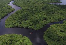 Estudo mostra que preservar a floresta Amazônica pode gerar uma economia anual, mínima, de R$ 33 bilhões para o Brasil.