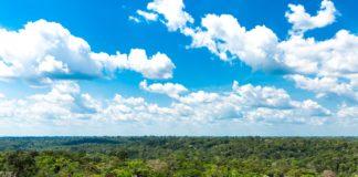 Trecho da floresta Amazônica; preservar vegetação nativa é muito lucrativo para o Brasil, diz estudo.
