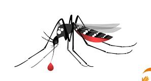 UFMG desenvolve nova tecnologia que vai ajudar a combater o Aedes aegypti, mosquito transmissor da dengue, chikungunya e zika