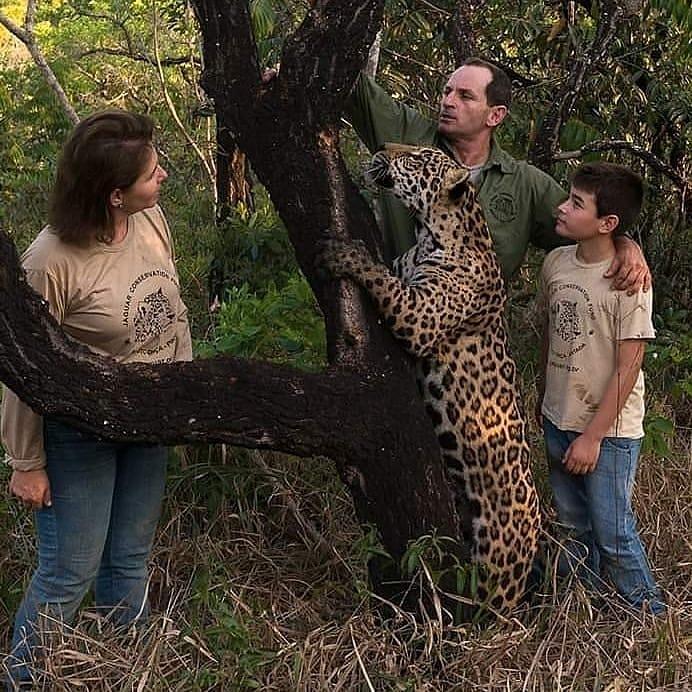 Leandro com a mulher, o filho e uma onça-pintada, espécie ameaçada de extinção