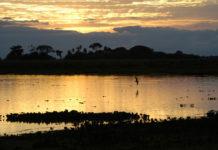 Pantanal é considerado pela Unesco Patrimônio Natural Mundial. Foto - Instituto Arara-Azul