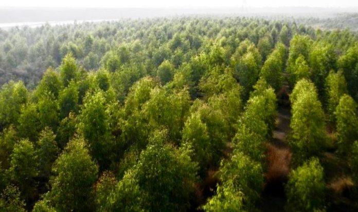 O Paquistão informa que já plantou 1 bilhão de árvores nos últimos anos e quer plantar mais 9 bilhões