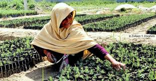 Trabalhadora em canteiro de mudas que estão sendo usadas para reflorestar o Paquistão