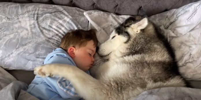 O pequeno Parker em momento fofura com seu cão, um husk siberiano. Foto - Youtube-reprodução