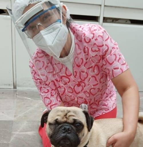 O pug Harley recebe carinho de uma enfermeira em hospital do México. Foto - Facebook