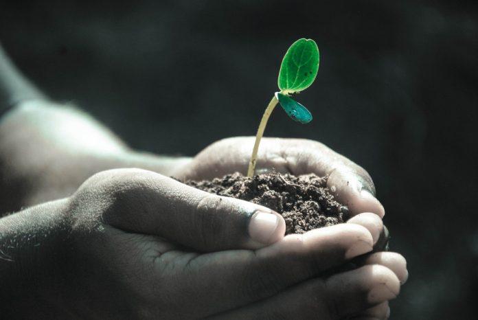 Cientistas israelenses descobriram que plantas geram energia, o que pode representar revolução na produção de energia limpa no mundo. Imagem - Pixabay
